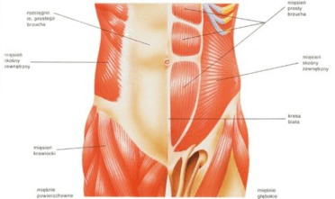 rozstęp mięśnia prostego brzucha, zdrowa mama, zdrowie kobiety, połóg, po porodzie