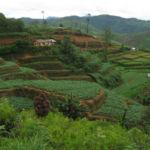 Plantacja herbaty Sri Lanka południowa