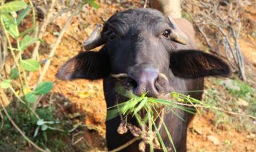 weganizm, dieta przyjazna zwierzętom