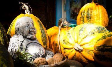 przepisy z dyni, wegańskie przepisy na jesien